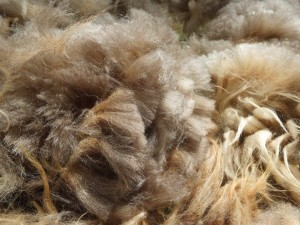 Mature Ewe Fleece
