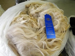 First Place Ram Fleece Navajo Churro Sheep Association 2012